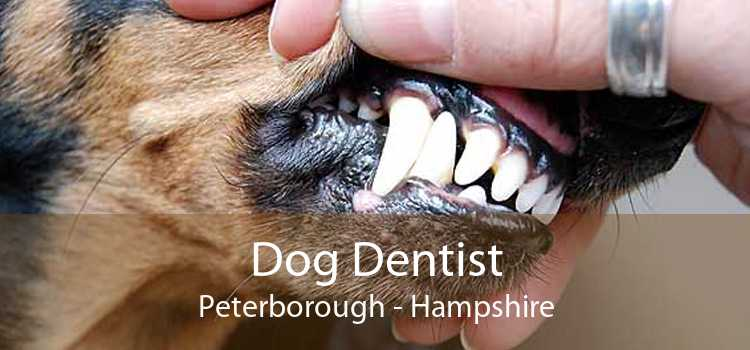 Dog Dentist Peterborough - Hampshire