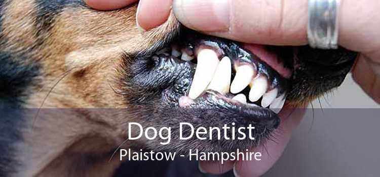 Dog Dentist Plaistow - Hampshire
