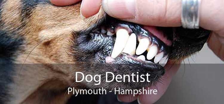 Dog Dentist Plymouth - Hampshire