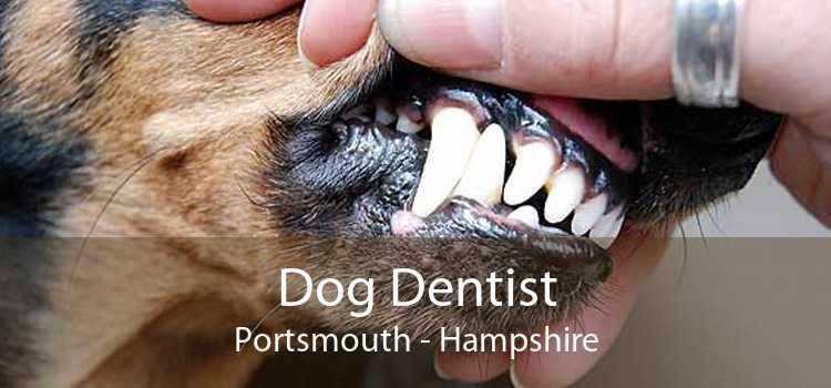 Dog Dentist Portsmouth - Hampshire