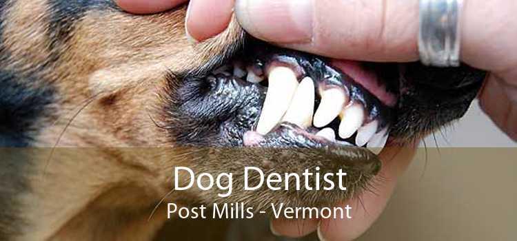 Dog Dentist Post Mills - Vermont