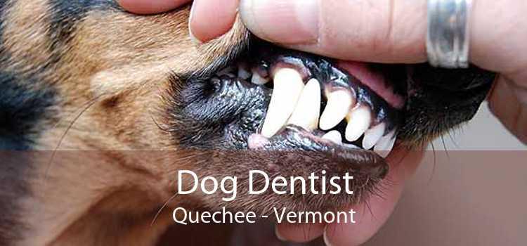 Dog Dentist Quechee - Vermont