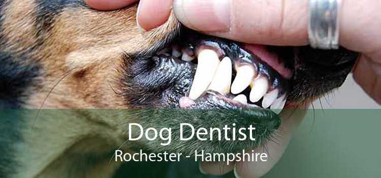 Dog Dentist Rochester - Hampshire
