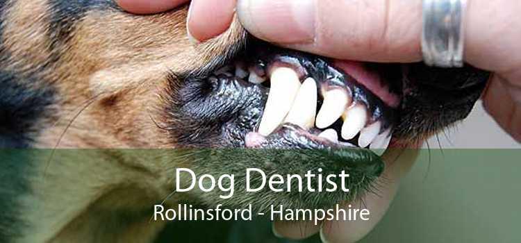 Dog Dentist Rollinsford - Hampshire