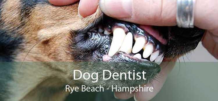 Dog Dentist Rye Beach - Hampshire