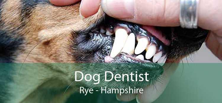 Dog Dentist Rye - Hampshire