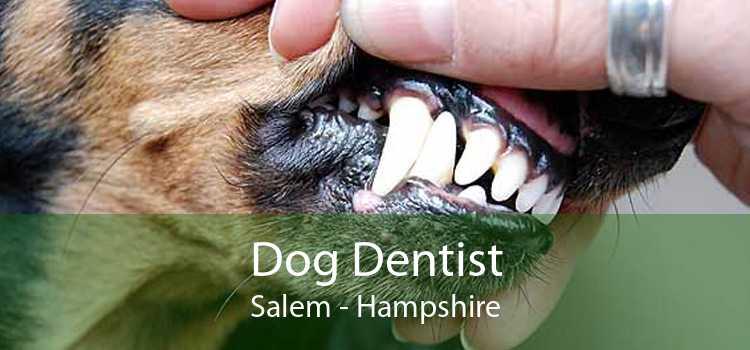 Dog Dentist Salem - Hampshire