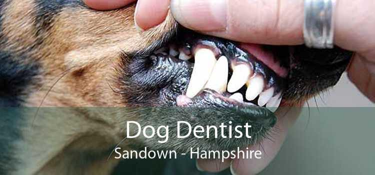 Dog Dentist Sandown - Hampshire