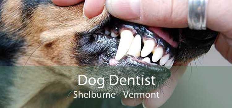 Dog Dentist Shelburne - Vermont