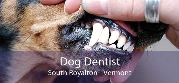 Dog Dentist South Royalton - Vermont