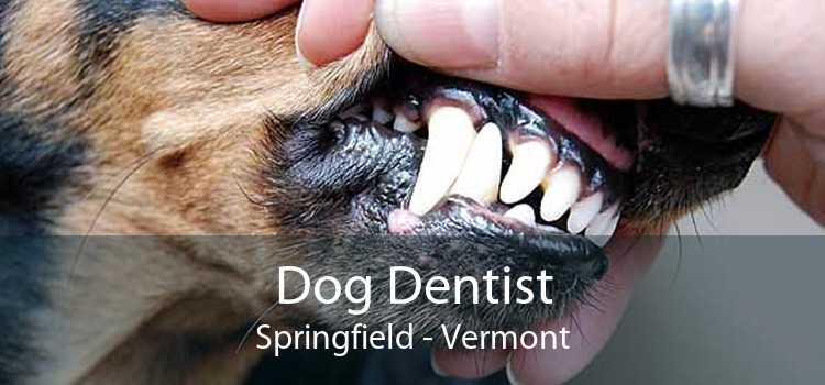 Dog Dentist Springfield - Vermont