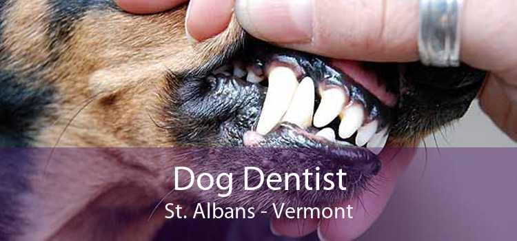Dog Dentist St. Albans - Vermont