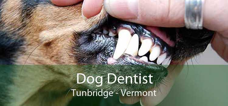 Dog Dentist Tunbridge - Vermont