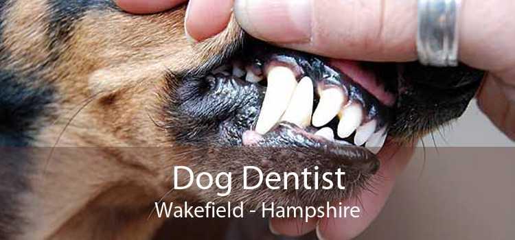 Dog Dentist Wakefield - Hampshire