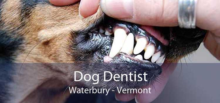 Dog Dentist Waterbury - Vermont