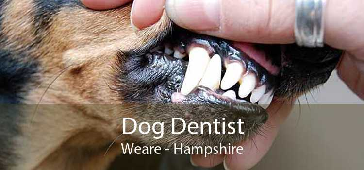 Dog Dentist Weare - Hampshire