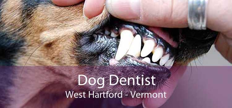 Dog Dentist West Hartford - Vermont