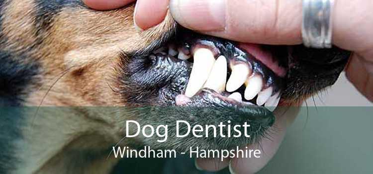 Dog Dentist Windham - Hampshire