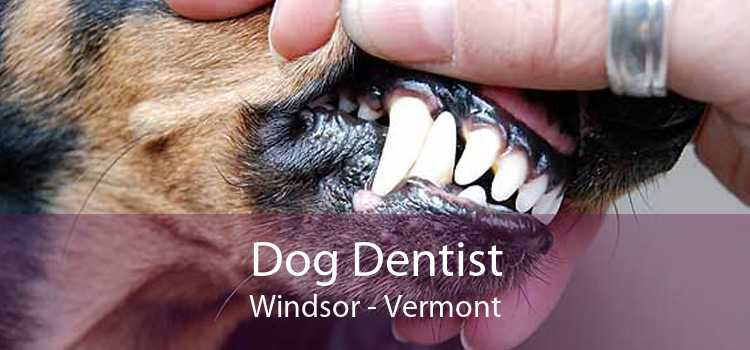 Dog Dentist Windsor - Vermont