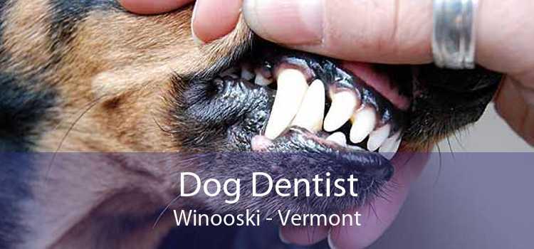 Dog Dentist Winooski - Vermont
