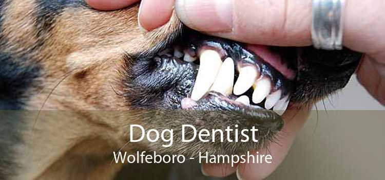 Dog Dentist Wolfeboro - Hampshire