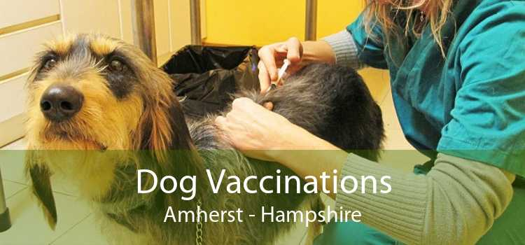Dog Vaccinations Amherst - Hampshire