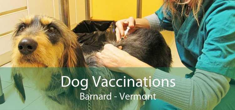 Dog Vaccinations Barnard - Vermont