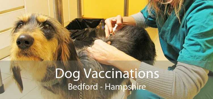 Dog Vaccinations Bedford - Hampshire