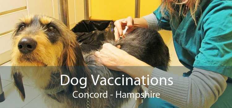 Dog Vaccinations Concord - Hampshire