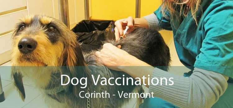 Dog Vaccinations Corinth - Vermont