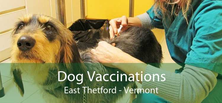 Dog Vaccinations East Thetford - Vermont