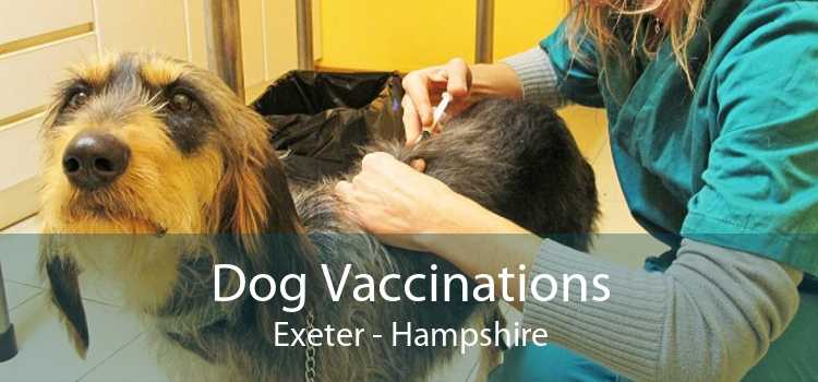 Dog Vaccinations Exeter - Hampshire
