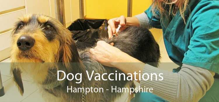 Dog Vaccinations Hampton - Hampshire