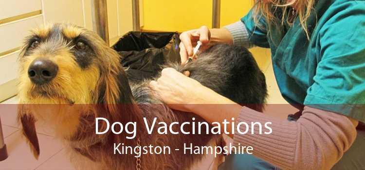 Dog Vaccinations Kingston - Hampshire