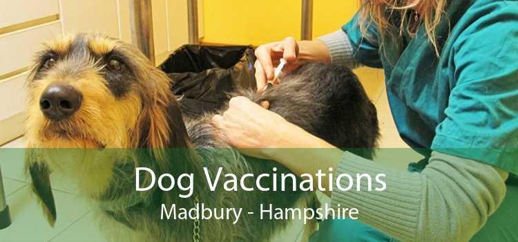 Dog Vaccinations Madbury - Hampshire