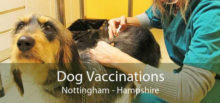 Dog Vaccinations Nottingham - Hampshire