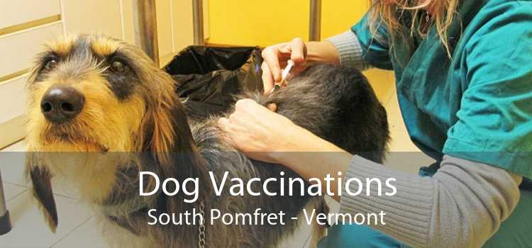 Dog Vaccinations South Pomfret - Vermont