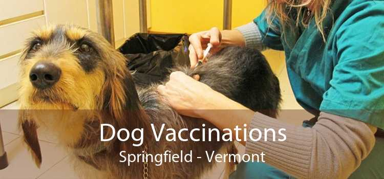 Dog Vaccinations Springfield - Vermont