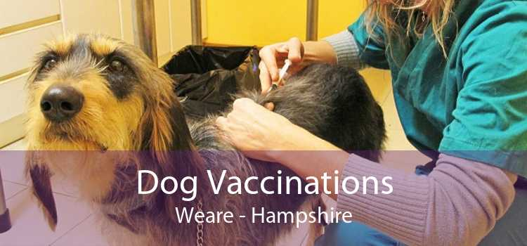 Dog Vaccinations Weare - Hampshire
