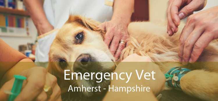 Emergency Vet Amherst - Hampshire