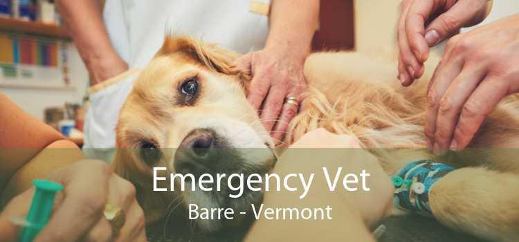 Emergency Vet Barre - Vermont
