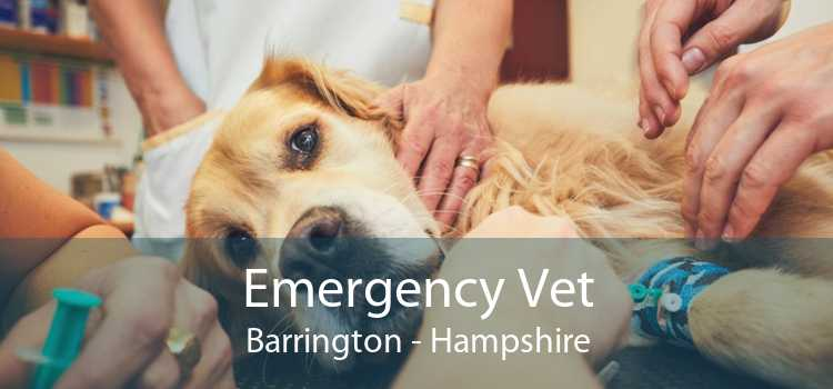 Emergency Vet Barrington - Hampshire