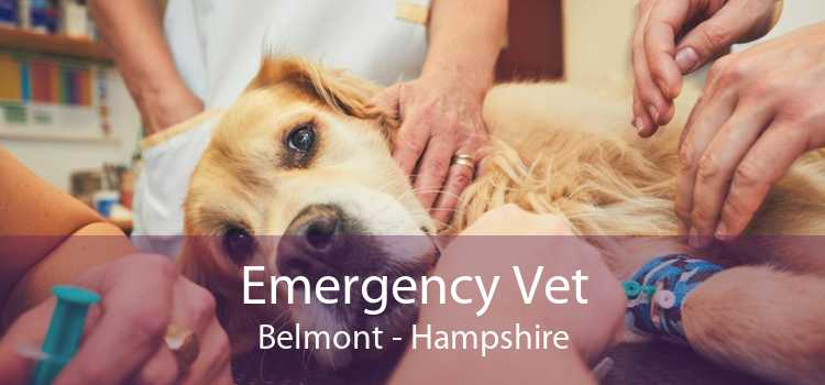 Emergency Vet Belmont - Hampshire