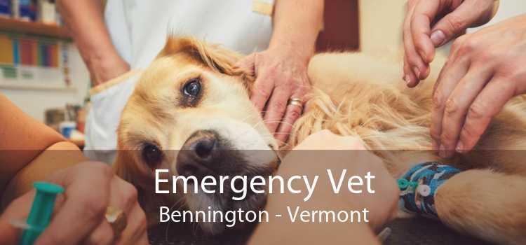 Emergency Vet Bennington - Vermont
