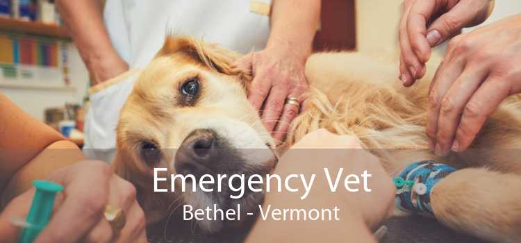 Emergency Vet Bethel - Vermont