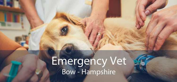 Emergency Vet Bow - Hampshire