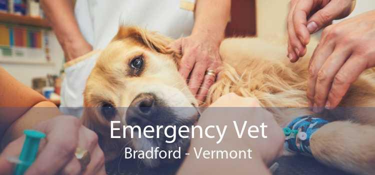 Emergency Vet Bradford - Vermont