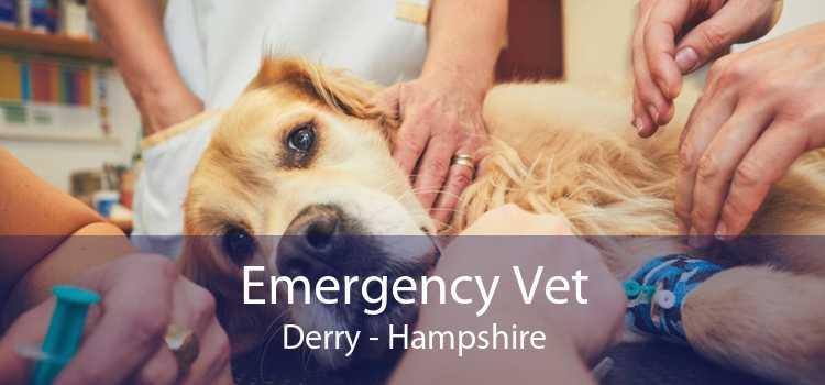 Emergency Vet Derry - Hampshire