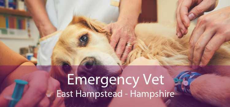 Emergency Vet East Hampstead - Hampshire