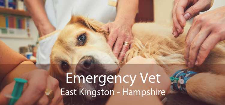 Emergency Vet East Kingston - Hampshire
